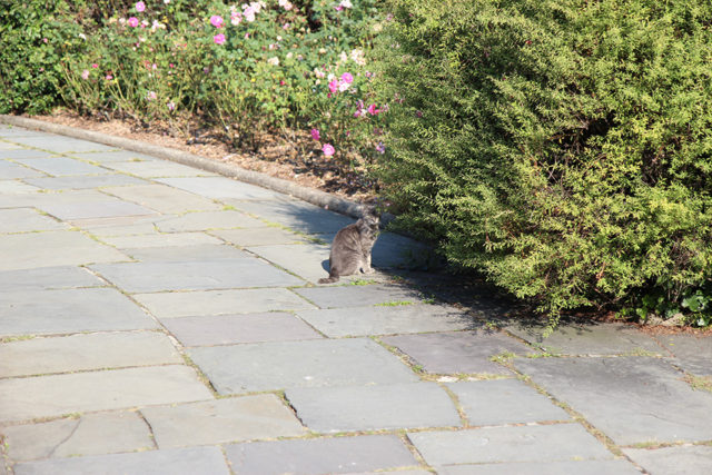 Cat in Central Park
