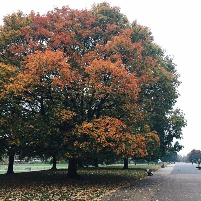 Autumn in Hyde Park  london hydepark
