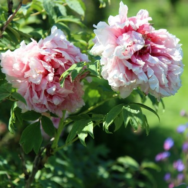 Photo Essays: Westbury Gardens