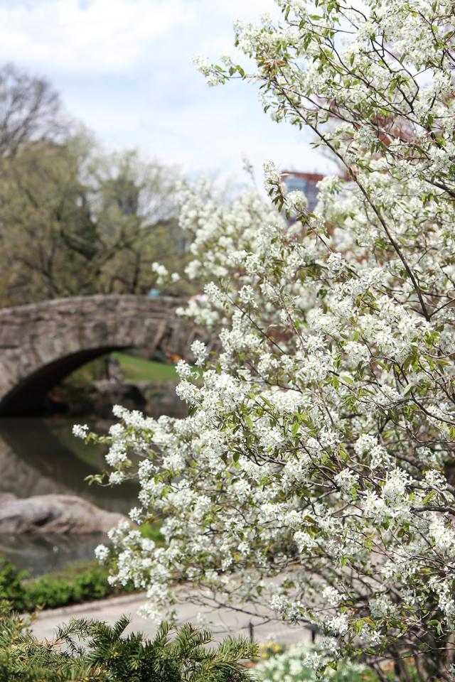 spring in central park -5548