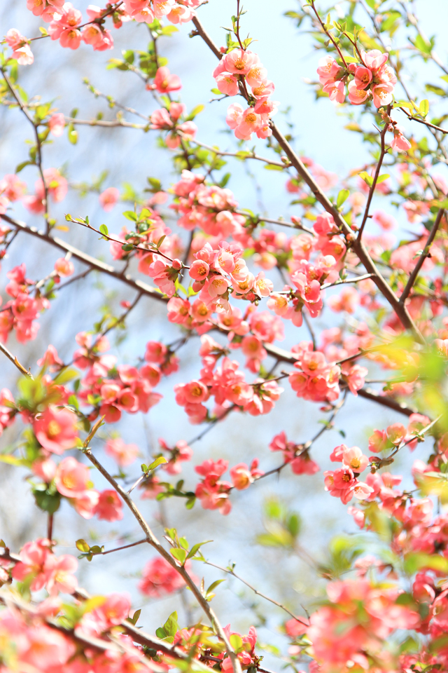 essays spring and fall Spring falls between winter and summer it rules over the months of march and april in india, it is honored as the king of the seasons related articles: essay on the season i like the best - winter.
