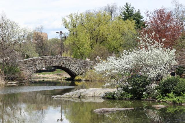 spring in central park -5569