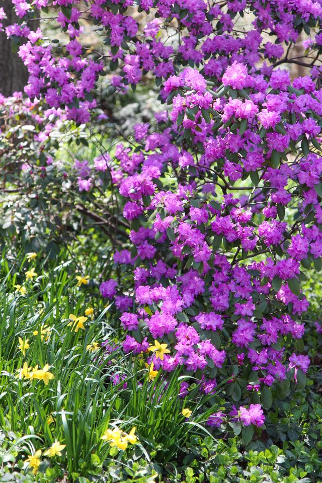 spring in central park -5573