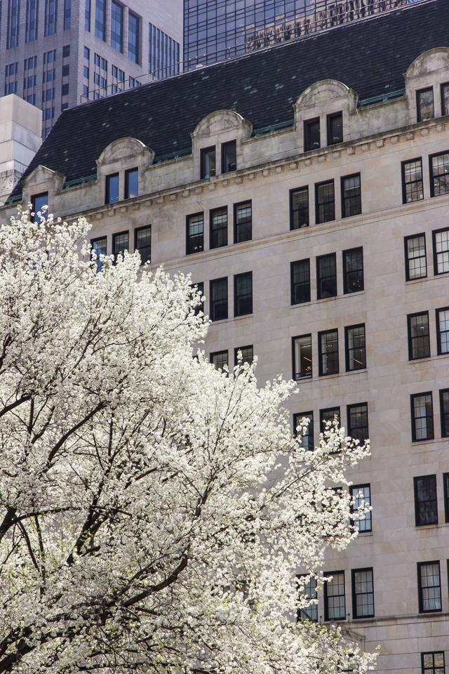 spring in central park -5576
