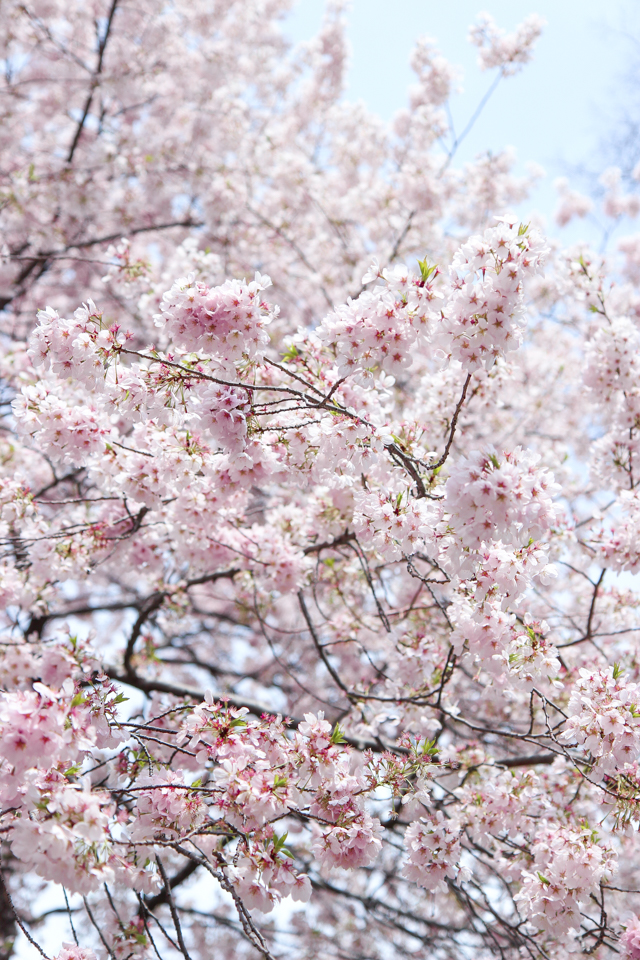 essays spring and all It is the most pleasant time of all essay on spring season human and dog friendship is the oldest it is the writing useful animal to the mankind we have written.