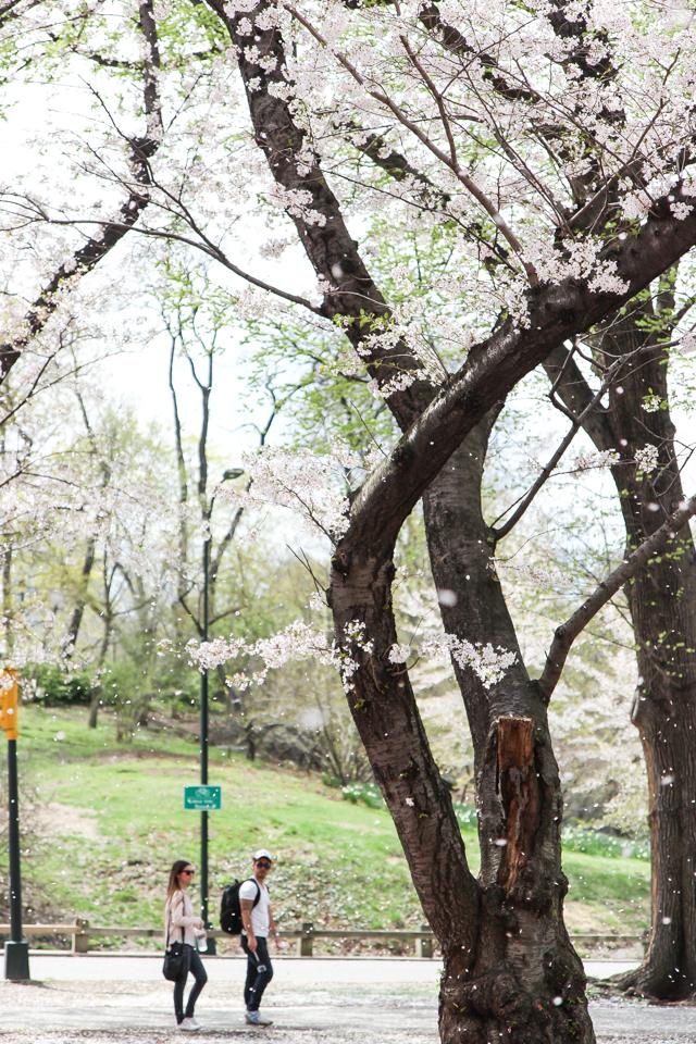 spring in central park -5641