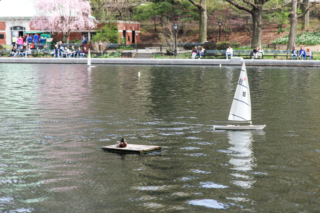 spring in central park -5661