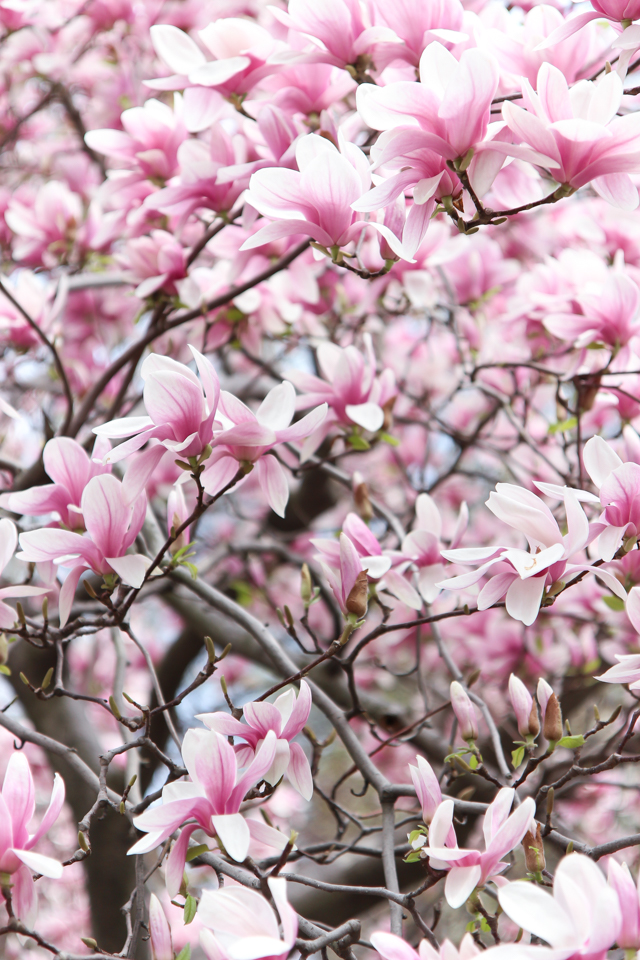 spring in central park -5671