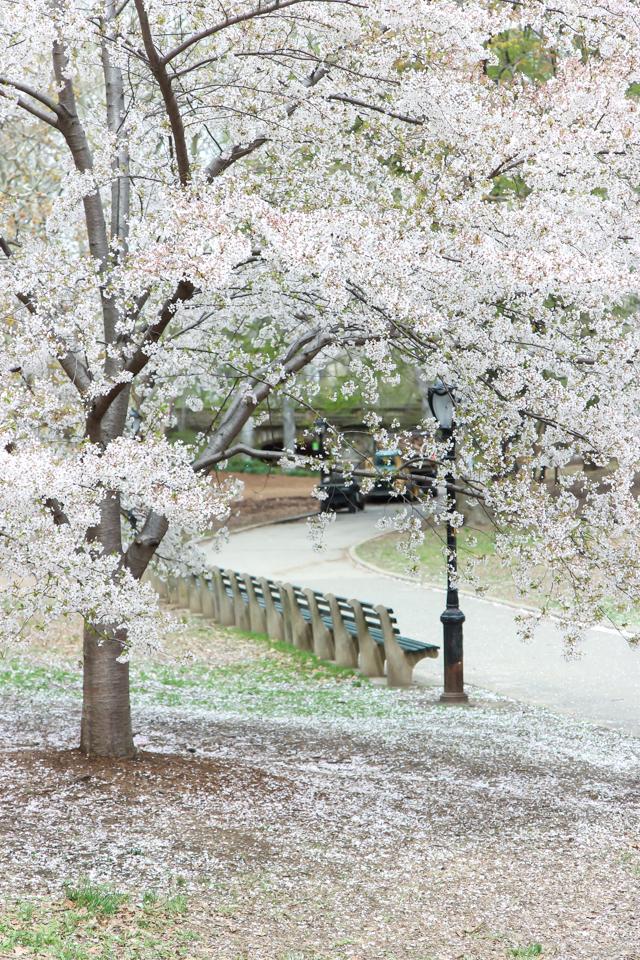 spring in central park -5685