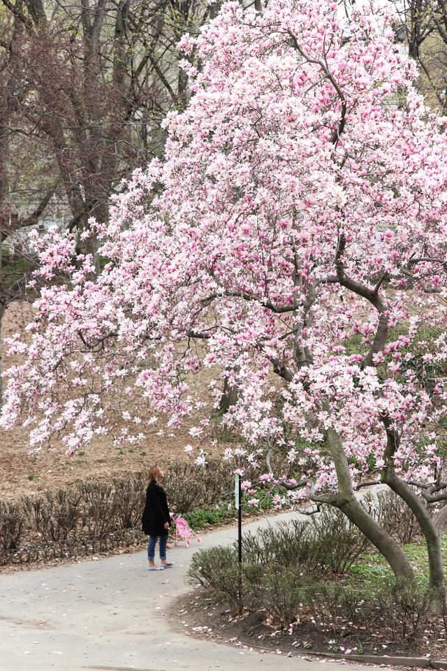 spring in central park -5710