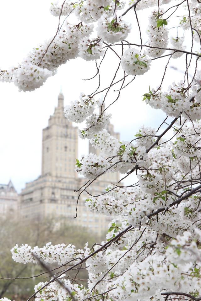 spring in central park -5735