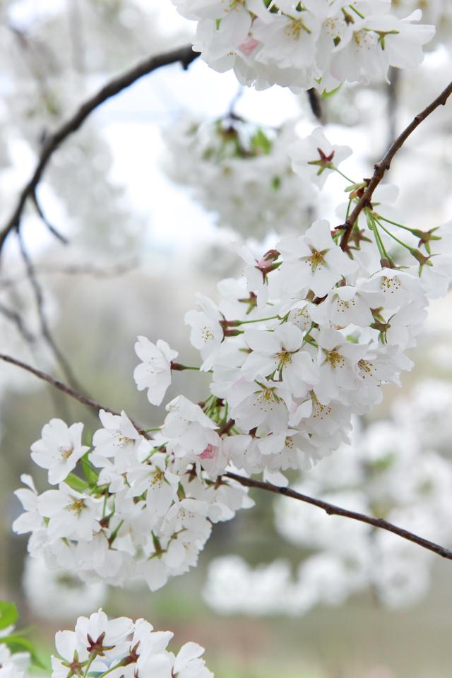 spring in central park -5746