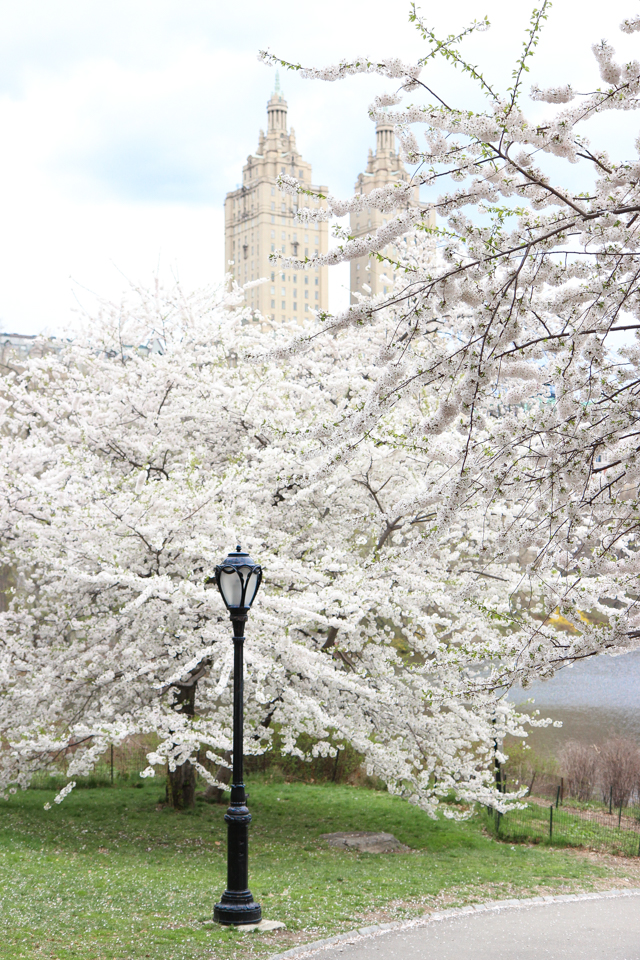 spring in central park -5754