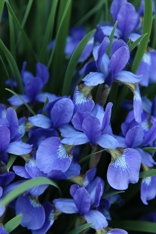 Blooms-6944