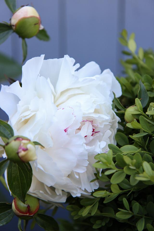 Blooms-6949
