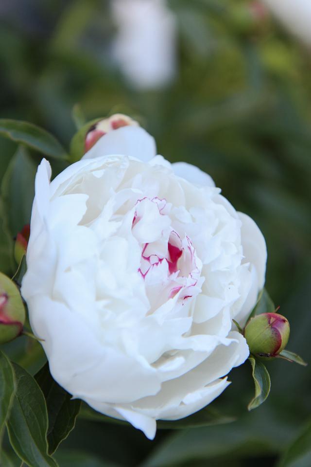 Blooms-6987