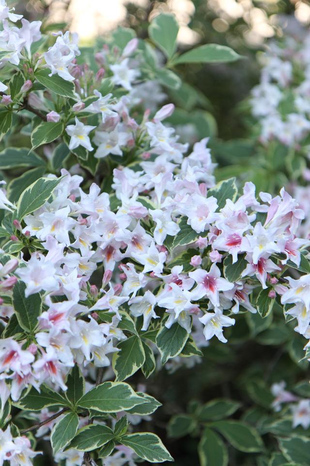 Blooms-6995