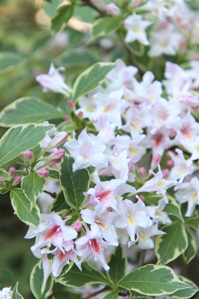 Blooms-6998