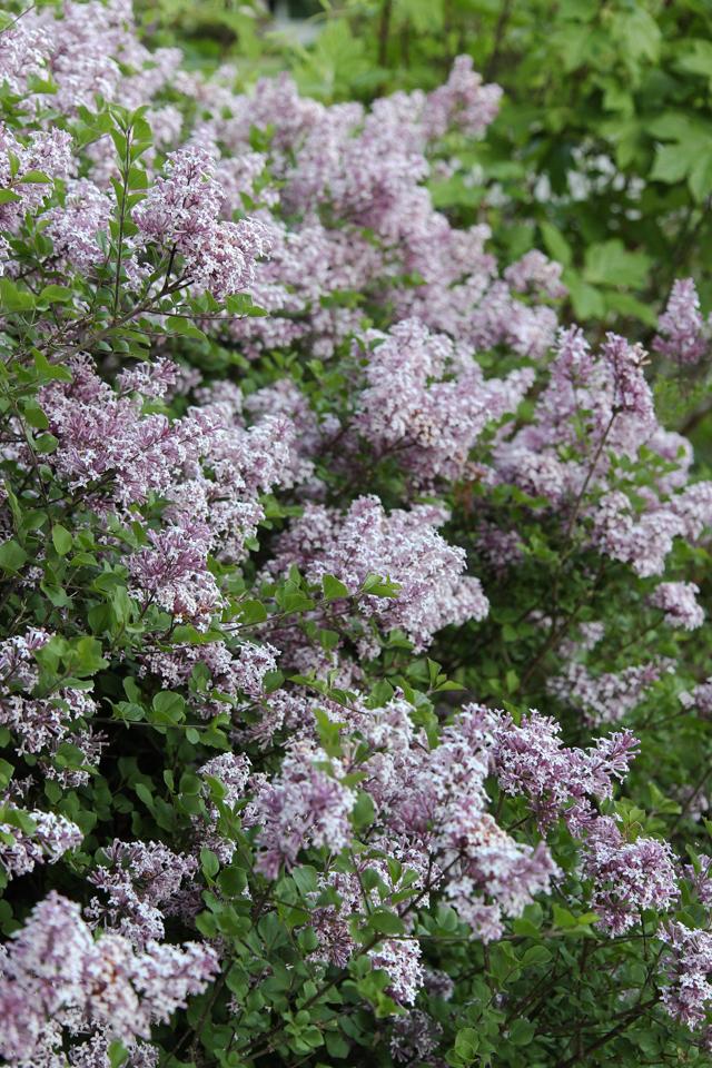 Blooms-7003