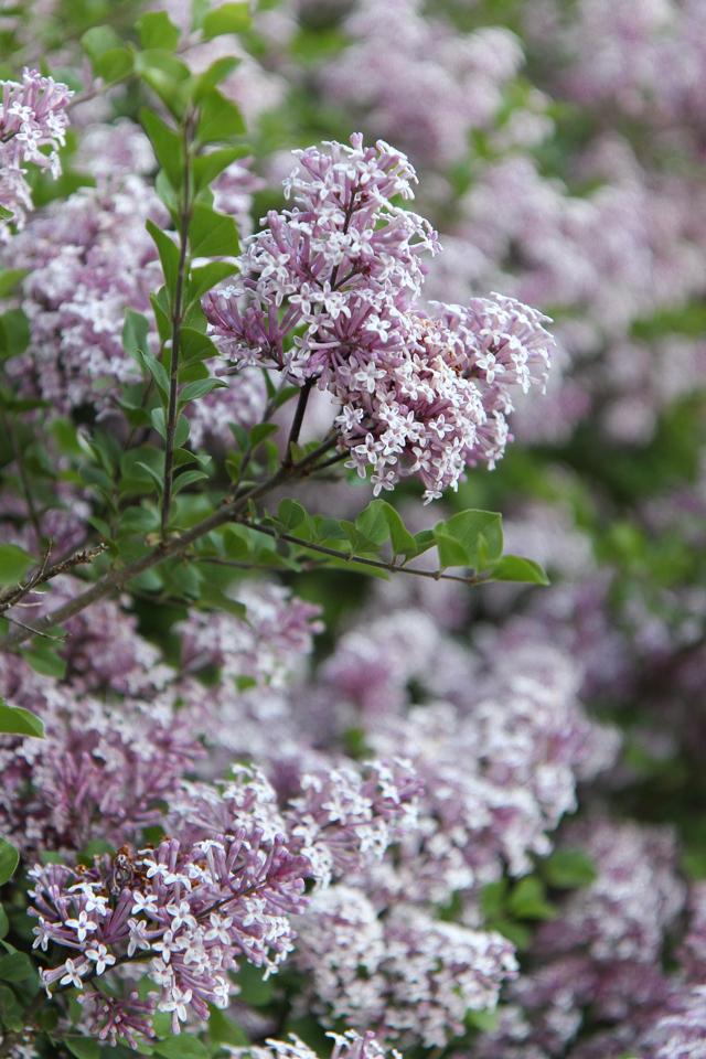 Blooms-7009