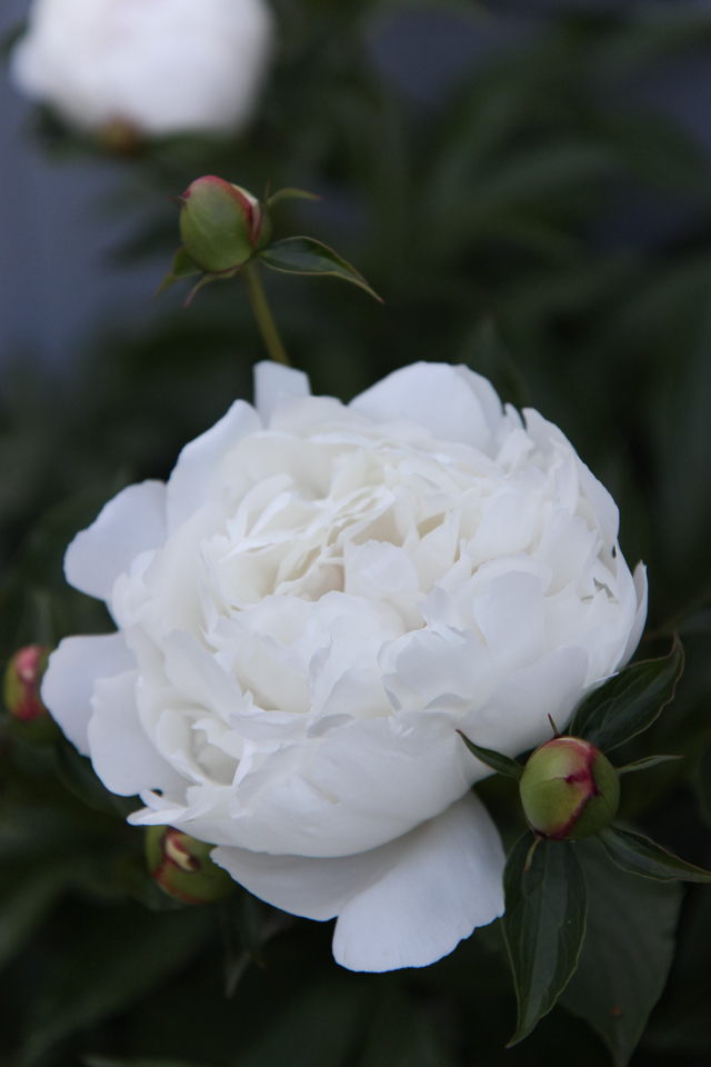 Blooms-7012