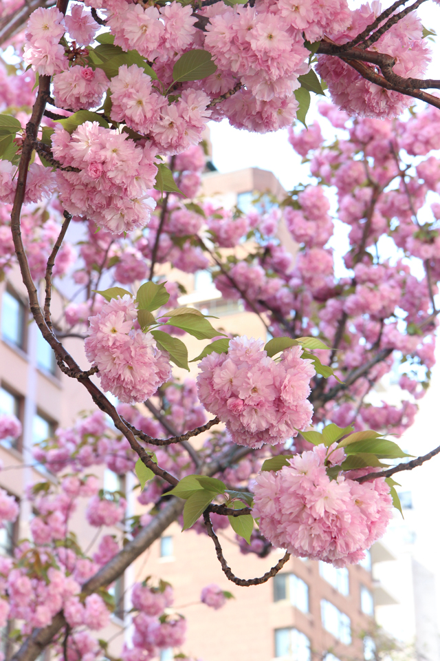 pink flowers-6005