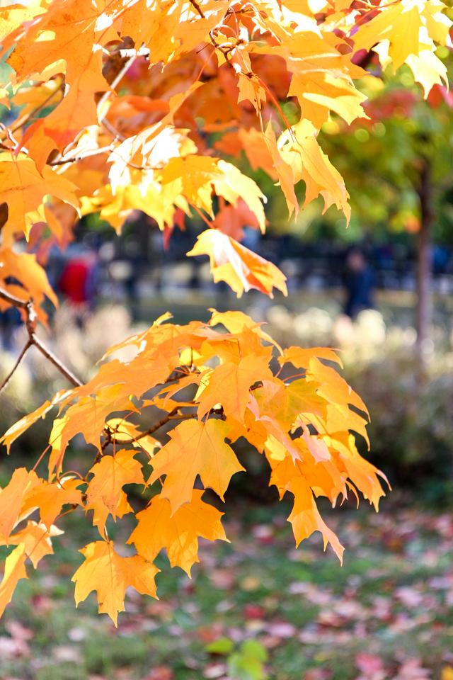 autumn in central park-9473