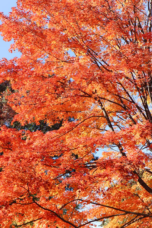 autumn in central park-9479