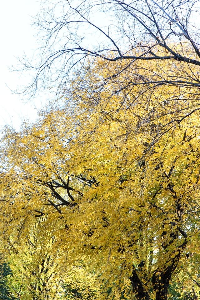 autumn in central park-9494