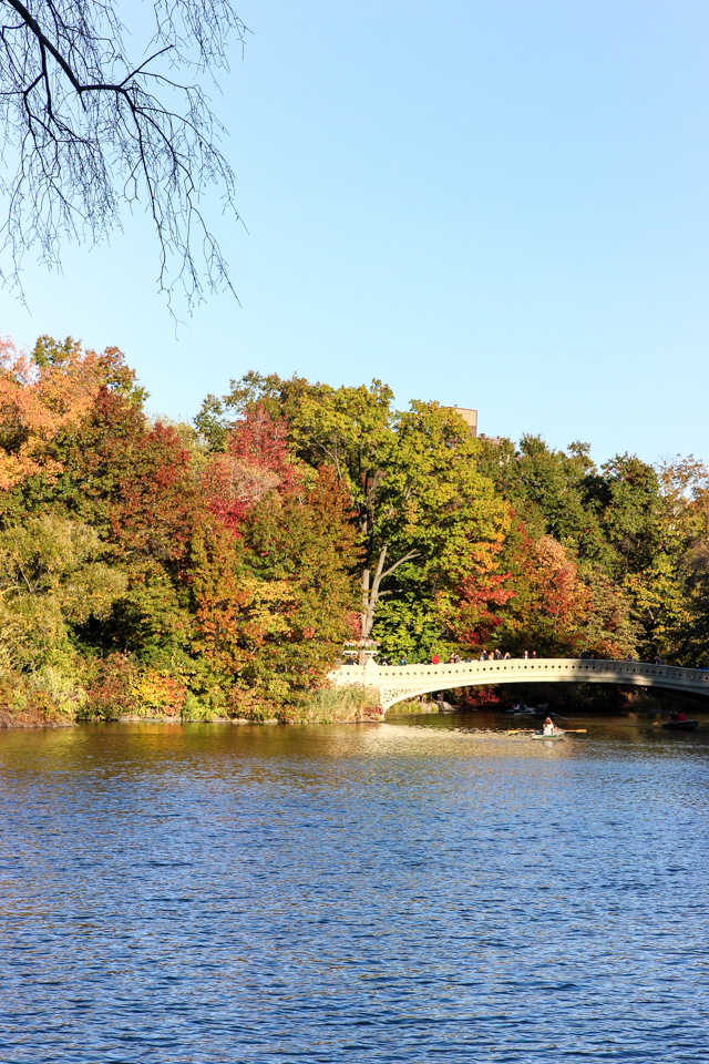 autumn in central park-9505