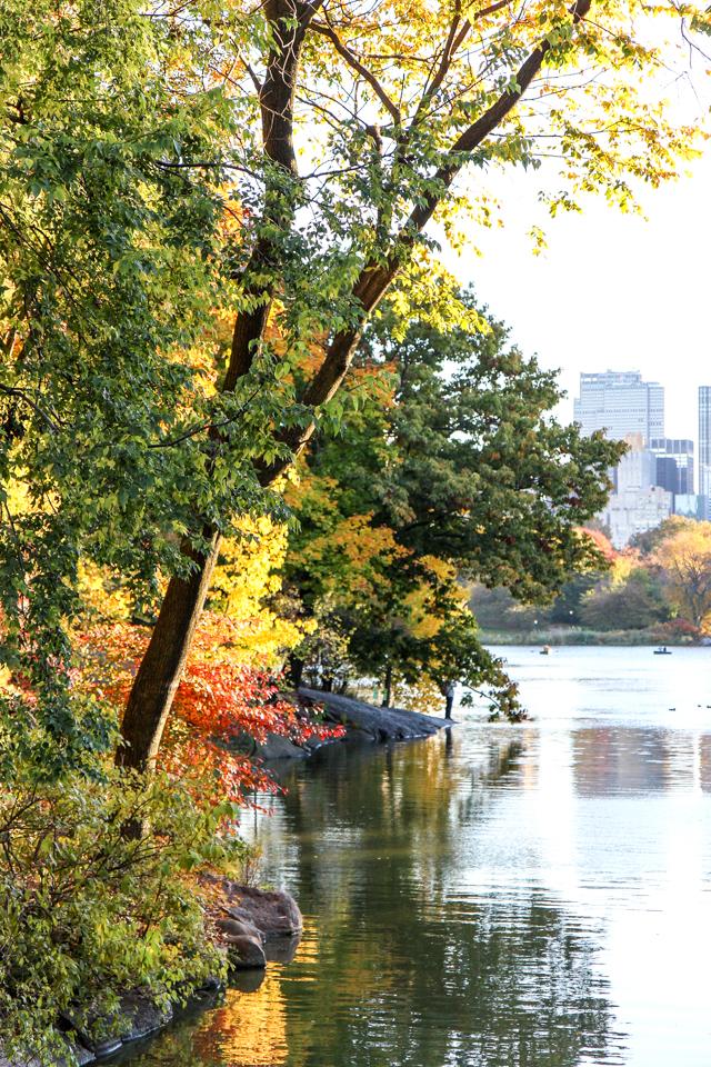 central park essay