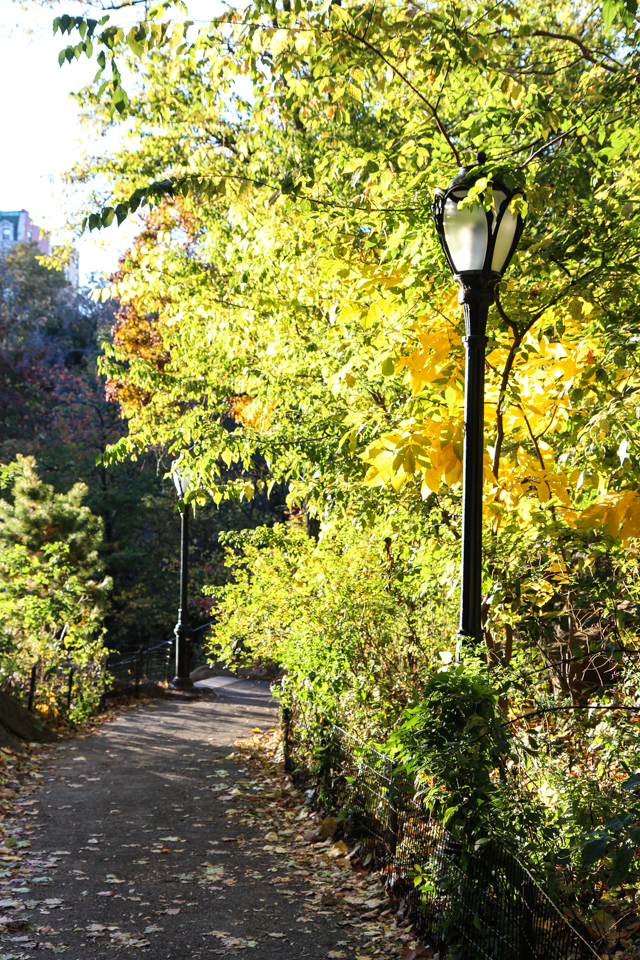 autumn in central park-9537