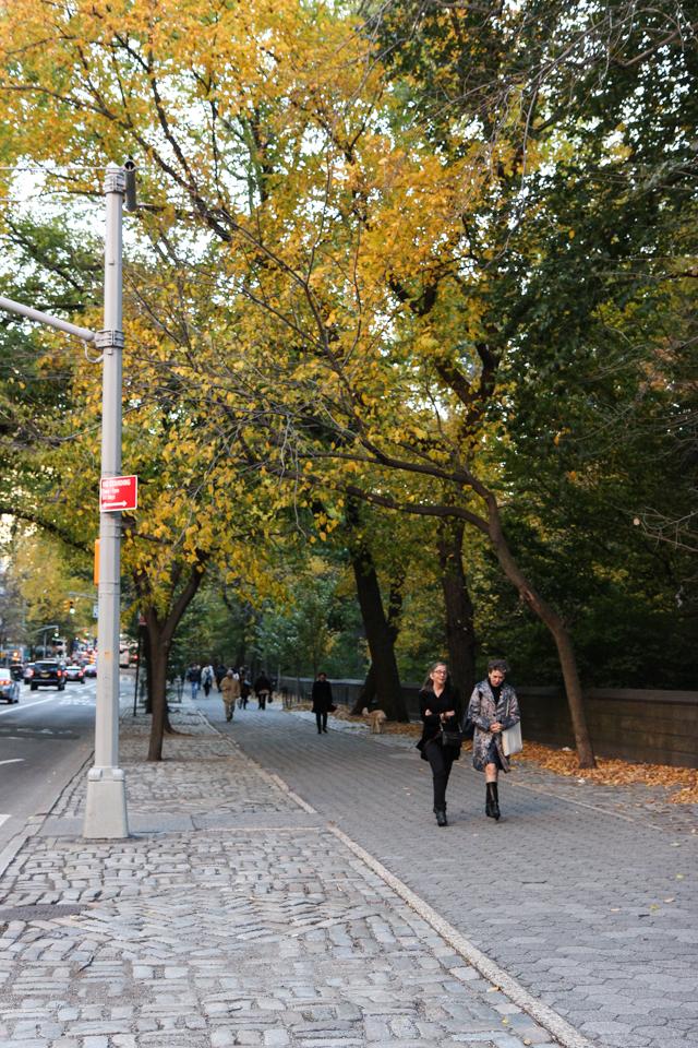 autumn in central park-9573