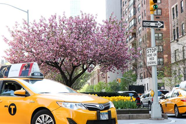 Park Avenue tulips-2341