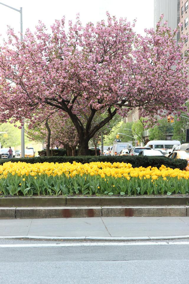 Park Avenue tulips-2350