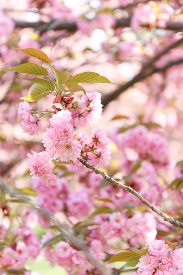 central park spring-2377