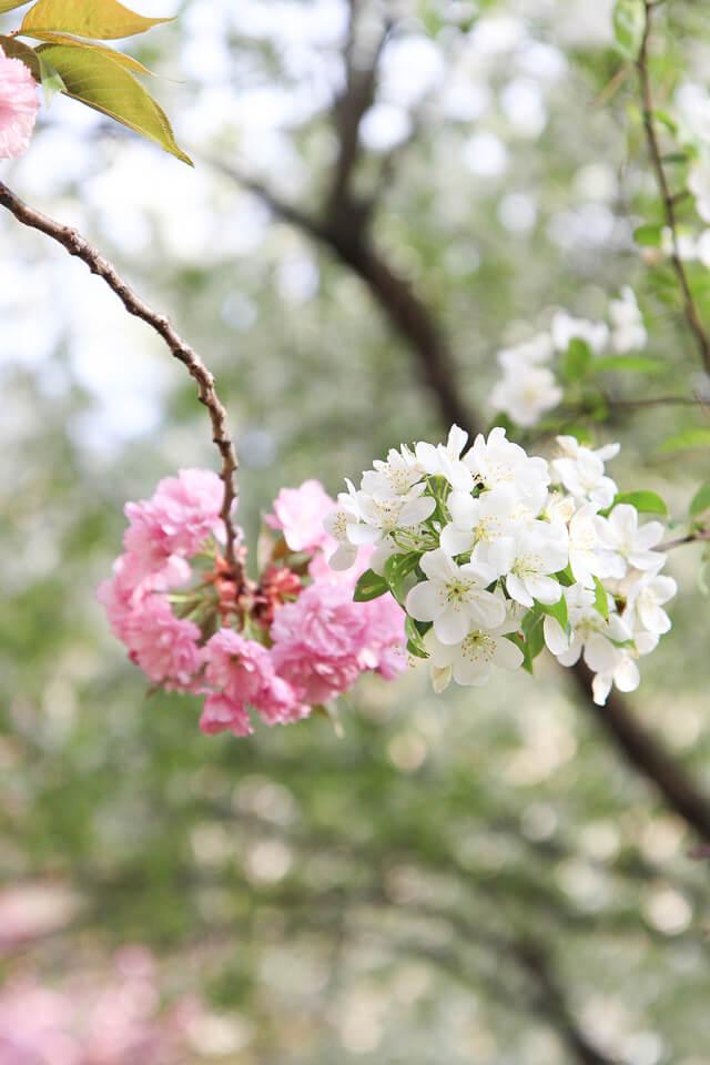 central park spring-2485