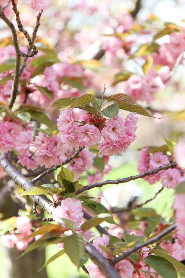 spring in central park-2372-2
