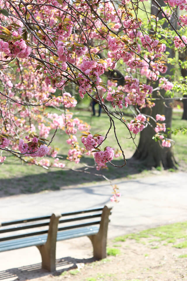 spring in central park-2375
