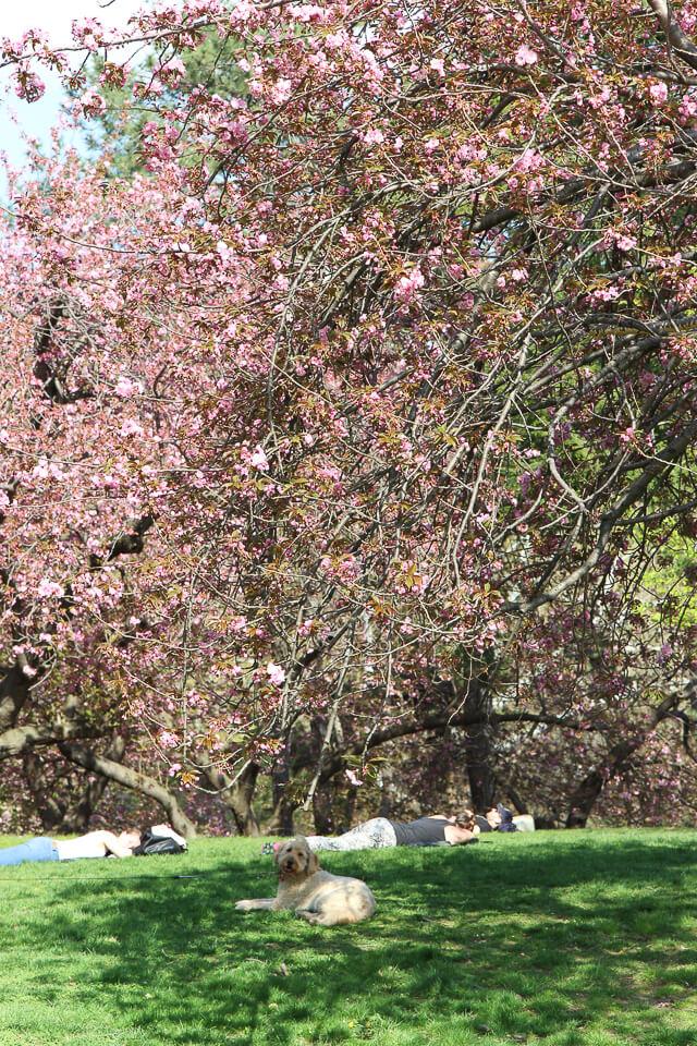 spring in central park-2397