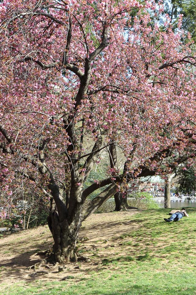 spring in central park-2400
