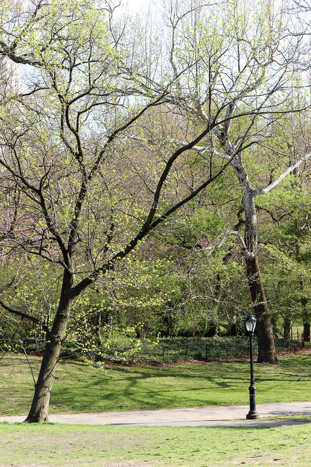 spring in central park-2406