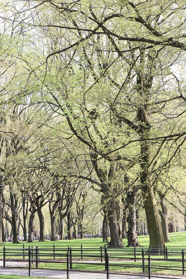 spring in central park-2435