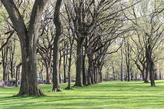 spring in central park-2436