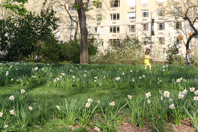 spring in central park-2448