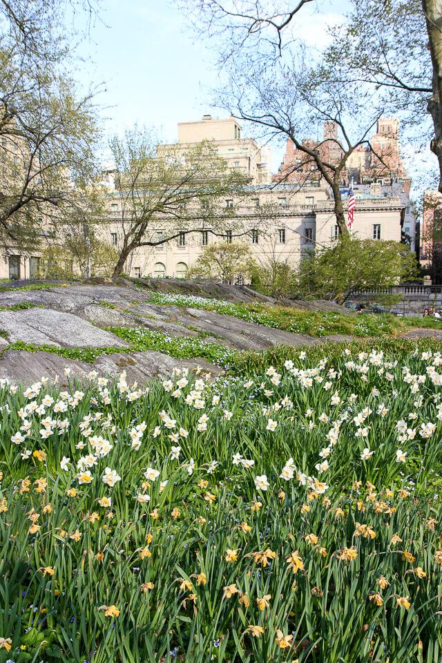 spring in central park-2452