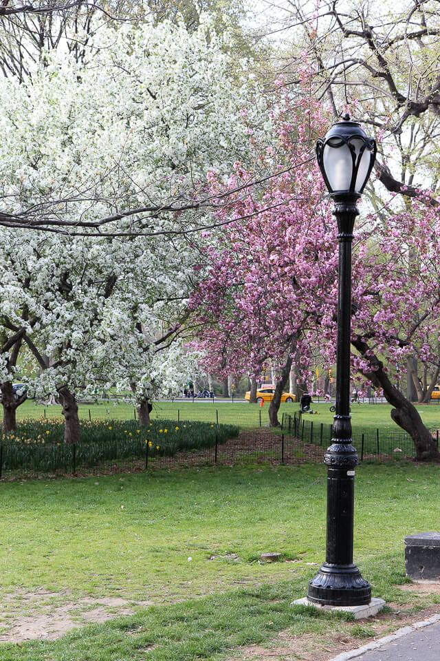 spring in central park-2454