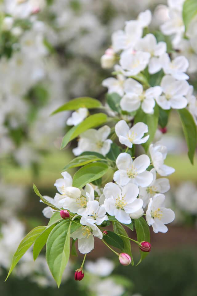 spring in central park-2461