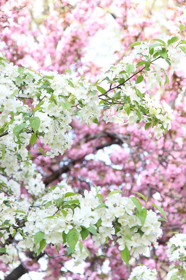 spring in central park-2466