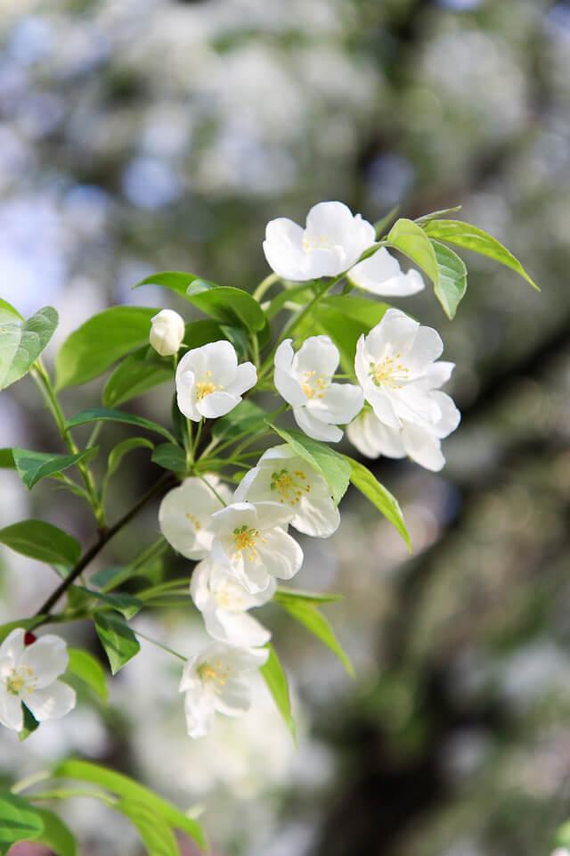 spring in central park-2480